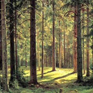 В жилом комплексе «Крылья» будет создан городской лес